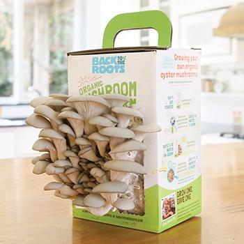 Organic Mushroom Mini Farm
