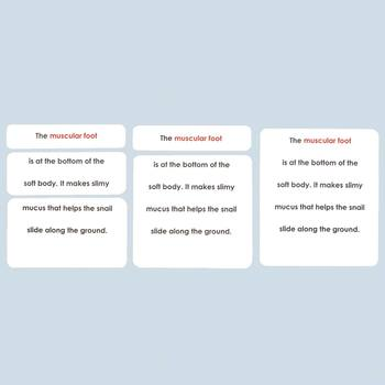 Parts of the Snail Definition Cards