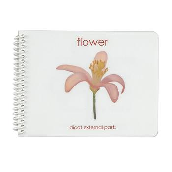 Parts of a Flower (Dicot) Booklet