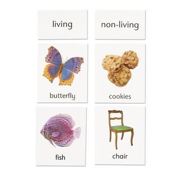 Living / Non-Living Classification