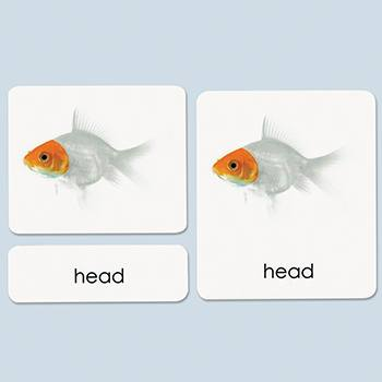 Parts of the Fish Photo Cards