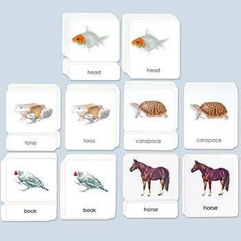 Set of All Five Parts of the Vertebrates Photo Cards - Lam.