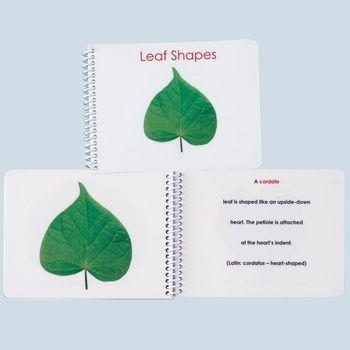 Botany Cabinet Leaf Shapes External Anatomy Booklet