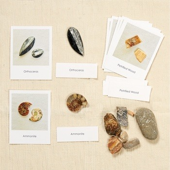 Fossils with Matching Cards
